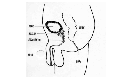【No.18】原水爆禁止世界大会に参加して・病気のはなし「前立腺肥大症」